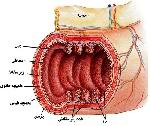 708233x150 - تحقیق درباره ی بافت بدن